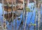Весеннее отражение-1
